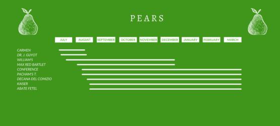 Copia di Pears (2)
